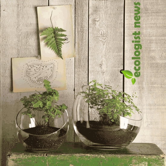 Create an Indoor Garden with Modern Terrarium Containers