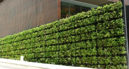 Green Walls and Their Types