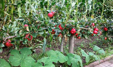 Planning Your Own Fruit Garden