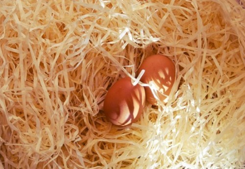 Starting Your Own Smallholding