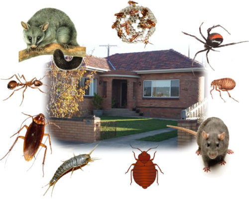 Eco-Friendly Pest Control Solutions
