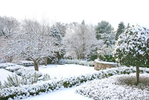 Creating the perfect winter garden wonderland