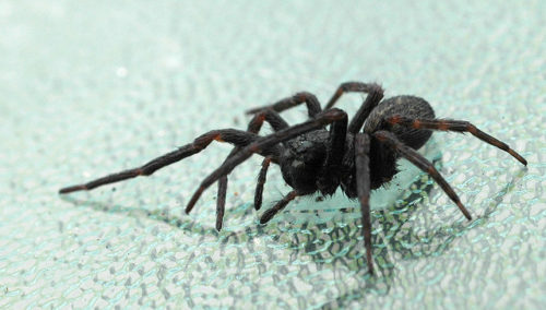 How to stop spiders from entering your home