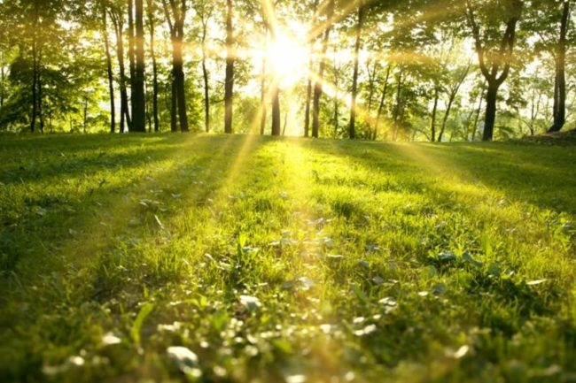 How to Spring Ahead in Your Field this Year