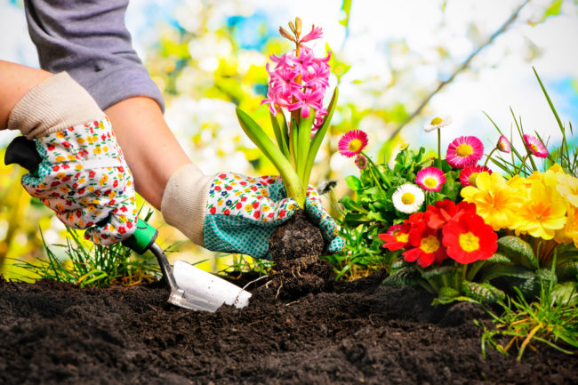 Image result for What should you do with your garden this spring?